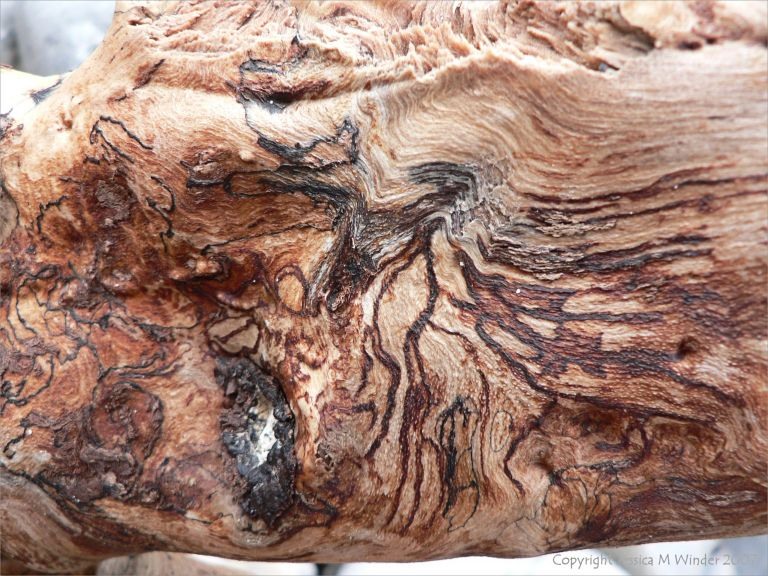 Patterns in driftwood caused by spalting