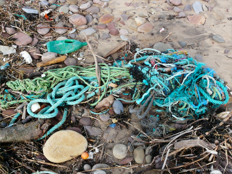 Green flotsam rope on the strandline