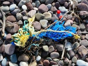 Flotsam rope on the strandline