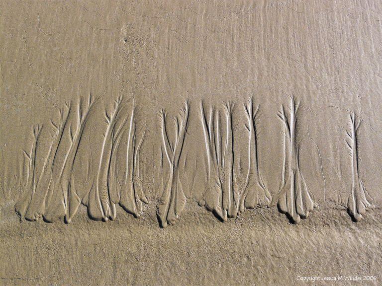 Natural sand ripple pattern