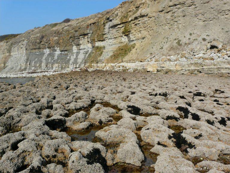 Black patches of Pygmy Lichen on seashore rocks