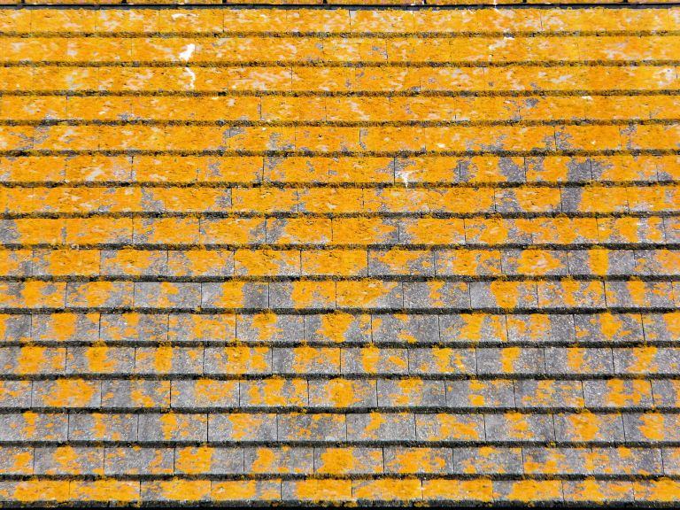 P1080810a Pattern of yellow lichen on a roof top at Wyke Regis, Dorset, UK.