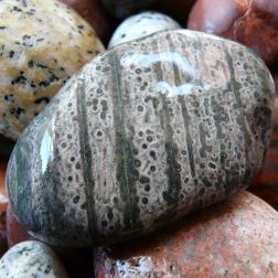 A green grey pebble of volcanic rock with stripes and dots from Corsica.