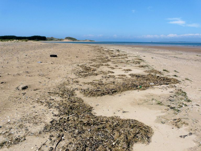 The strandline at Whiteford Point, Gower, South Wales, one day in June 2009