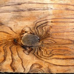 Wood grain pattern like a crab or spider on driftwood at Rhossili, Gower, South Wales.