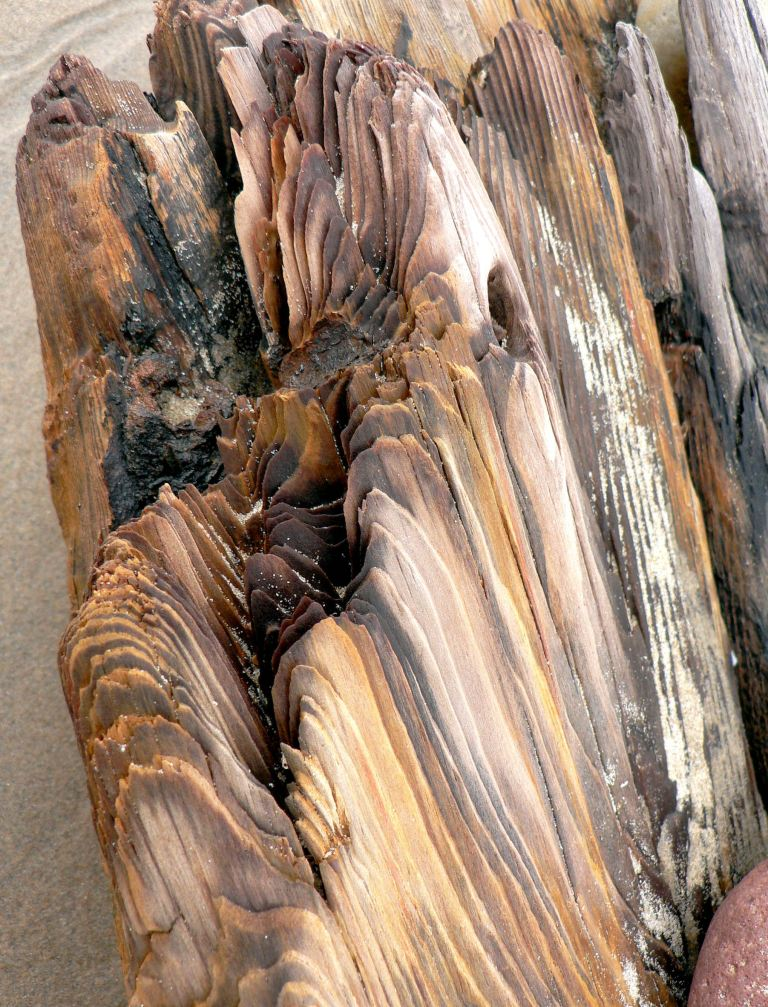 Rotting timber of an old wrecked ship on Rhossili seashore (4), Gower, South Wales.