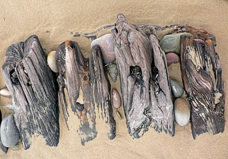 Wooden ribs of an old wrecked ship on Rhossili seashore (2), Gower, South Wales.