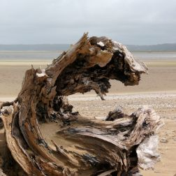 Driftwood on the sand at Whiteford National Nature Reserve, Gower, South Wales (6)
