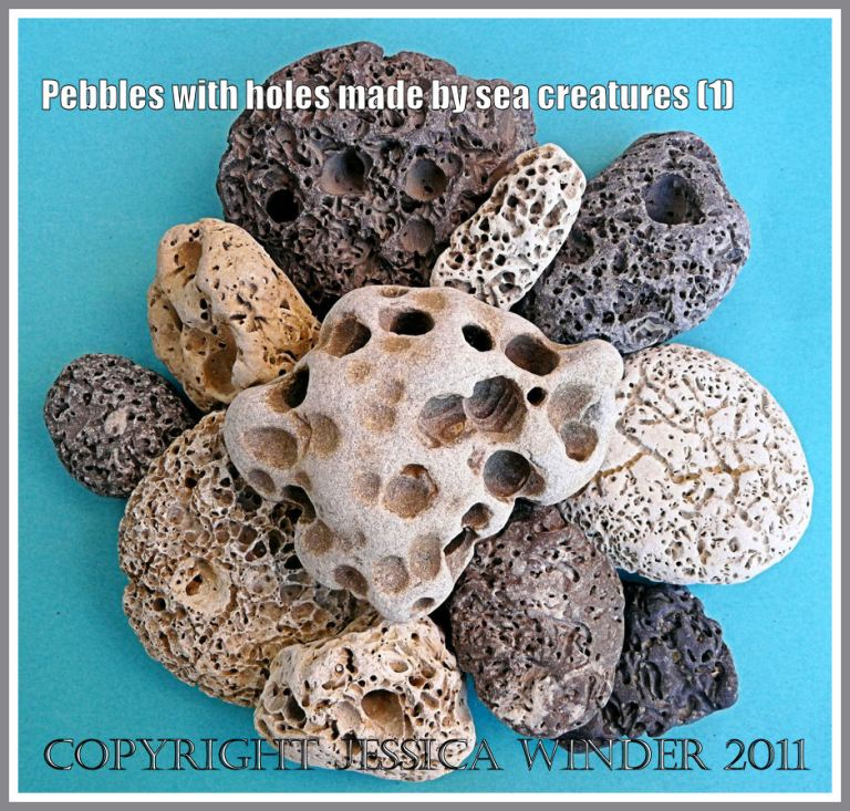 Pebbles with holes: An assortment of pebbles with holes made by sea creatures from the Jurassic Coast World Heritage Site in Dorset, UK (1)