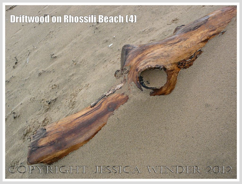 Driftwood on Rhossili Beach (4) - Driftwood simulacrum of a prehistoric monster or crocodilian at Rhossili Bay, Gower, South Wales.