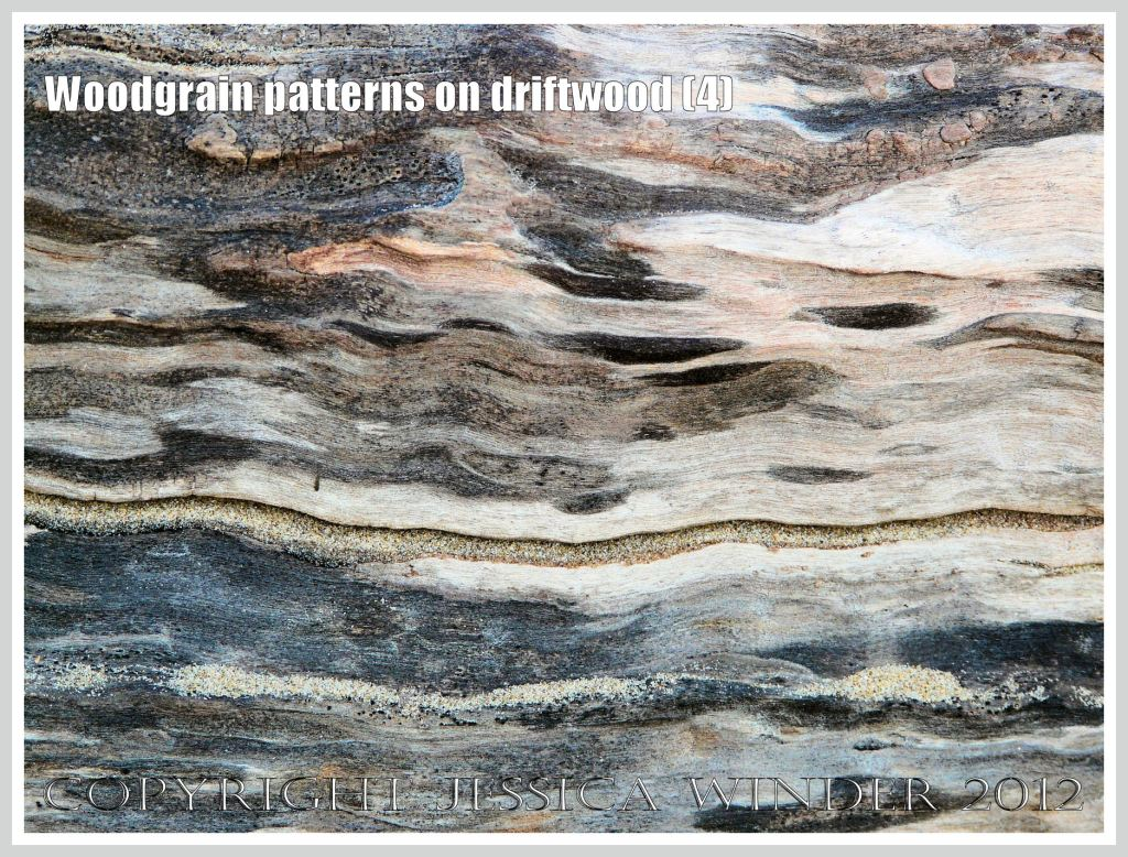 Woodgrain pattern on driftwood (4) - Natural abstract pattern of staining caused by fungal invasion on weathered driftwood washed ashore at Whiteford Sands, Gower, South Wales.
