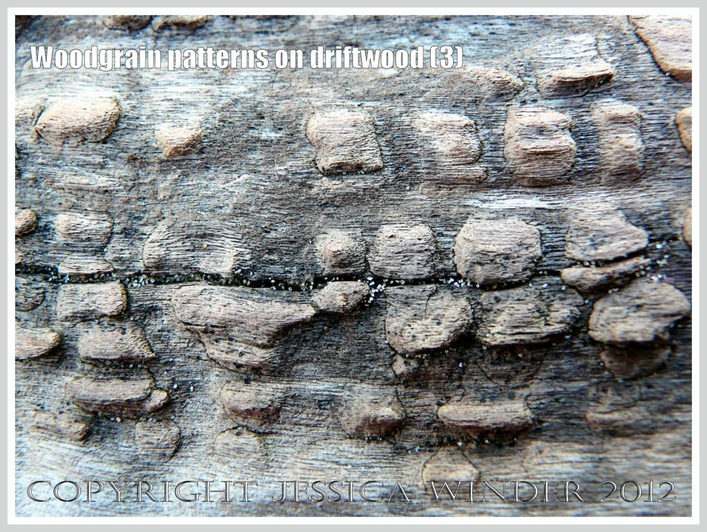 Woodgrain pattern on driftwood (2) - Natural abstract pattern of sculpturing caused by weathering on driftwood washed ashore at Whiteford Sands, Gower, South Wales.