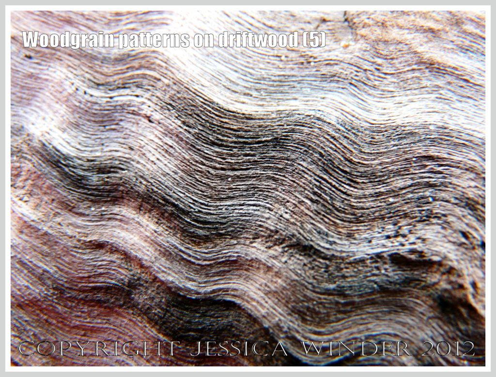 Woodgrain pattern on driftwood (5) - Natural abstract pattern of staining caused by fungal invasion, and raised texture created by wind-blown sand erosion, on weathered driftwood washed ashore at Whiteford Sands, Gower, South Wales.