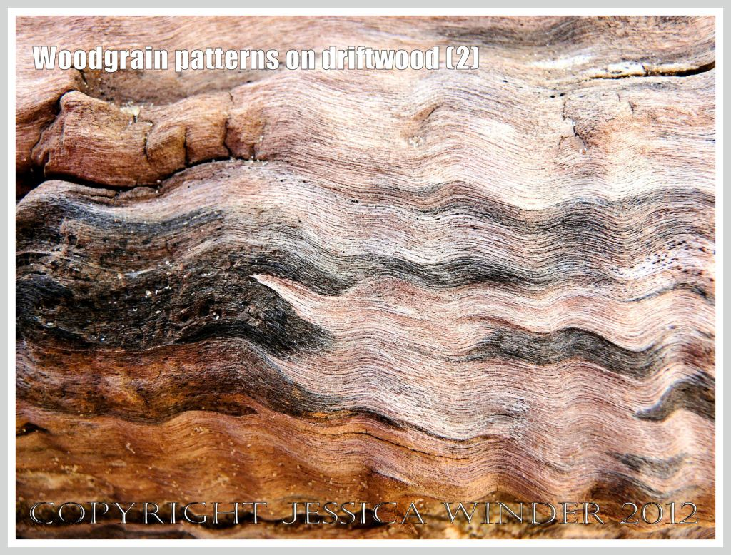 Woodgrain pattern on driftwood (2) - Natural abstract pattern of staining caused by fungal invasion on weathered driftwood washed ashore at Whiteford Sands, Gower, South Wales.