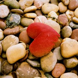 A red heart shaped cushion found water-logged and washed up as flotsam on the pebbles at Rhossili, Gower, South Wales.
