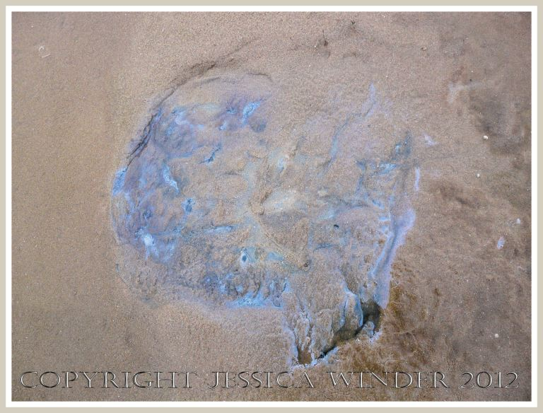Dead & decomposing jellyfish 11 - A vague blue gelatinous shadow on the beach where a Rhizostoma octopus jellyfish has completely decomposed, deliquesced and soaked into the sand.