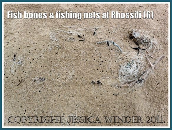 Fishing net barely visible on the surface of the sand, surrounded by numerous small holes made by burrowing sandhoppers that have stripped the meat from the bones of the trapped fish in the net. Rhossili Bay, Gower, South Wales, UK (6)