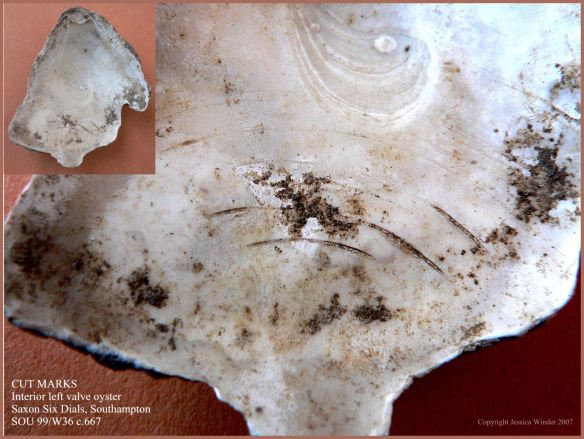 P1090250Blog6 Cut marks on the soft inner surface of a British Native Oyster shell (Ostrea edulis Linnaeus) from an archaeological excavation in UK - made by a knife in historic times when the oyster was opened (6)