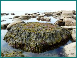 027 Boulders with seaweed, Eype, Jurassic Coast, UK