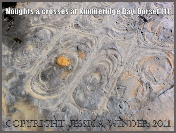Pattern of ovoid cracks (1) in rocks on the seashore at Kimmeridge Bay, Dorset, U.K. on the Jurassic Coast World Heritage Site