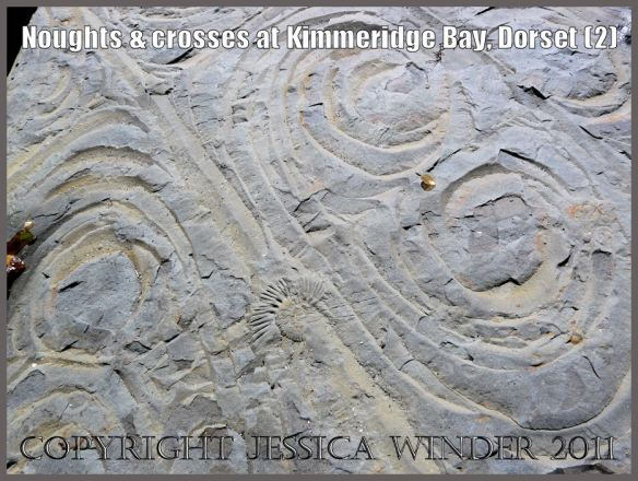 Pattern of circular and ovoid cracks (2) in dolomitic rocks on the seashore at Kimmeridge Bay, Dorset, U.K. on the Jurassic Coast World Heritage Site