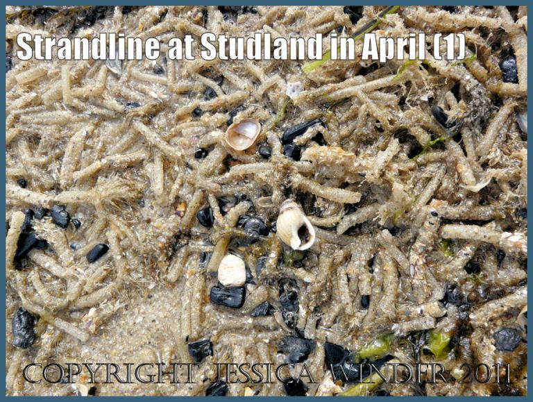 Strandline photograph: Strandline with thousands of marine worm tubes at Studland Bay in April on the Jurassic Coast World Heritage Site (P1080879aBlog1)