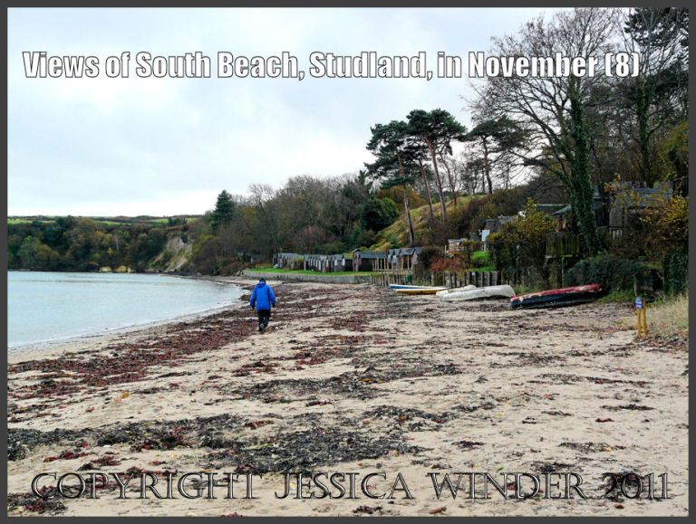 View of South Beach showing piles of red seaweed and flint pebbles on the strandline, with small boats on the sand and beach huts among the trees, Studland, Dorset, UK - part of the Jurassic Coast 27th November 2009 (8)
