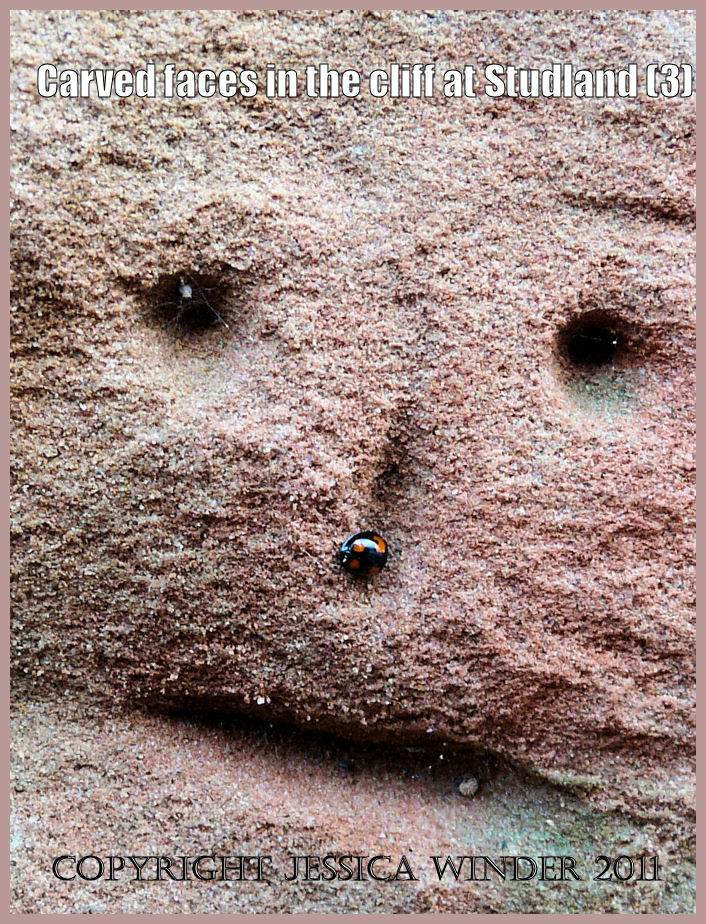 Detail of a face carved in the cliff showing a Two-Spot Ladybird sheltering in the groove representing the nose, South Beach, Studland, Dorset, UK - part of the Jurassic Coast (3)