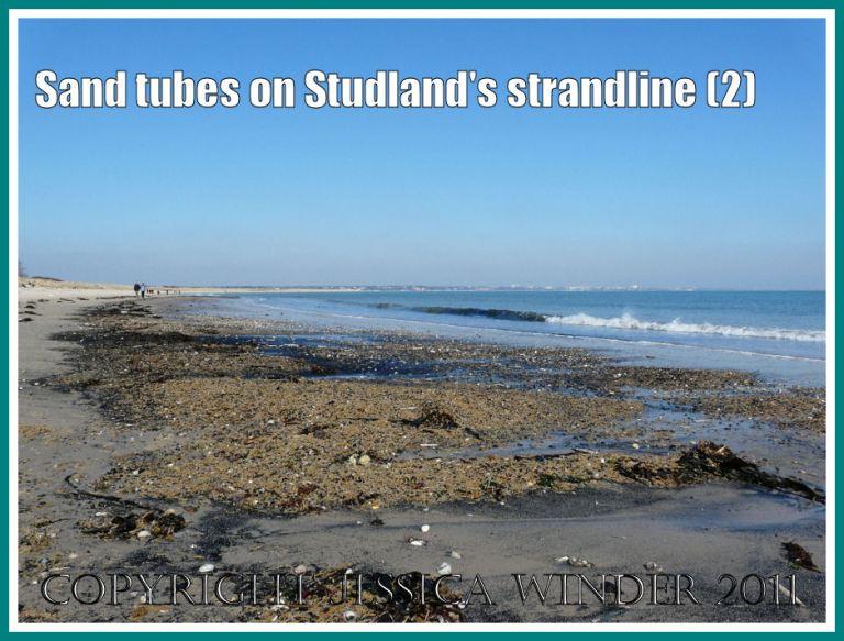 Studland Bay strandline with sand tubes: The strandline with piles of empty yellow sand-tubes at Studland Bay, Dorset, UK - part of the Jurassic Coast (2)