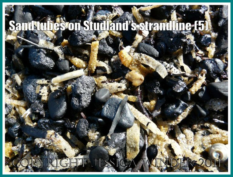 Strandline with charcoal and marineworm tubes: Detail of the strandline showing marine worm sand tubes , empty seashells, coal, and charcoal at Studland Bay, Dorset, UK - part of the Jurassic Coast (5)