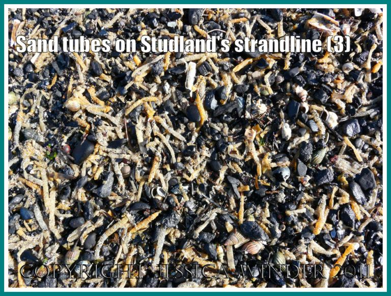 Strandline natural debris: Yellow sand tubes made by marine worms, intermingled with pieces of black coal and charcoal, on the strandline at Studland Bay, Dorset, UK - part of the Jurassic Coast (3)
