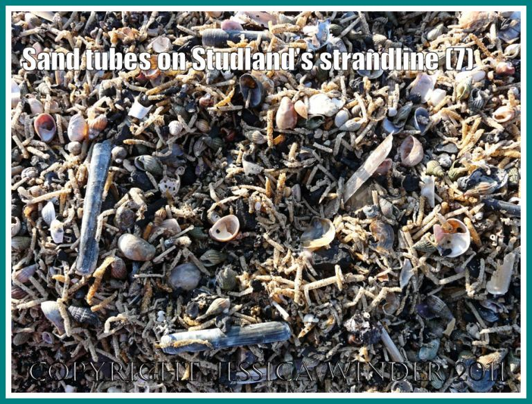 Strandline natural debris: Detail of the strandline full of marine worm sandtubes and empty seashells at Studland Bay, Dorset, UK - part of the Jurassic Coast (7)