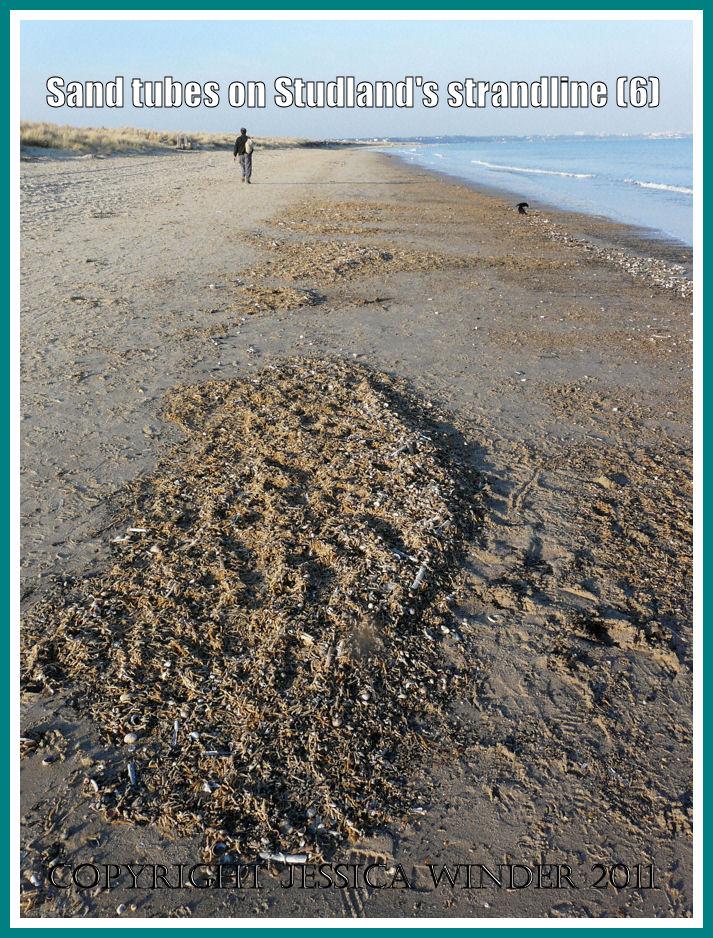 Strandline at Studland Bay: View of the strandline full of marine worm sandtubes and empty seashells at Studland Bay, Dorset, UK - part of the Jurassic Coast (6)