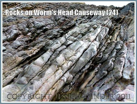 Carboniferous limestone rock strata on Worms Head Causeway, Rhossili, Gower, South Wales, UK (6)