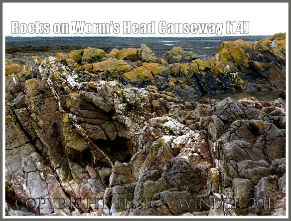 Worms Head rocks: Rocks in the intertidal zone close to shore on the Worm's Head Causeway in Gower, South Wales, UK showing Carboniferous limestone rocks covered with coloured lichens (14)