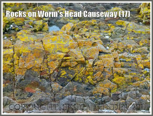 Seashore lichens: Yellow and orange coloured lichen on jagged rocks of the upper shore on Worms Head Causeway, Gower, South Wales, UK (17)