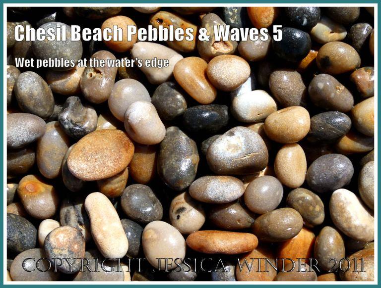 Jurassic Coast pebbles: Wet pebbles at the water's edge on Chesil Beach, Dorset, UK, on the Jurassic Coast (5)