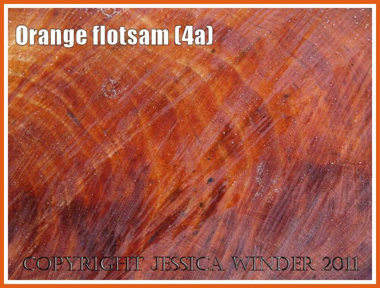 Orange flotsam: Close-up detail of the orange coloured woodgrain in the cut cross-section of a piece of driftwood washed ashore as flotsam (4a)