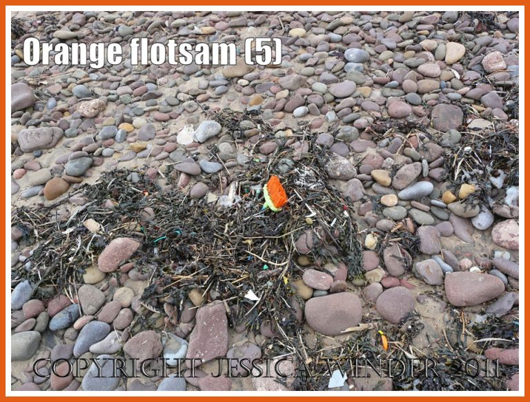 Gower flotsam: Orange-bristled deck brush washed ashore as flotsam onto the pebble beach strandline (5)