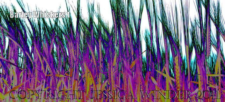 BarleyWhiskers1 Digital artwork of ripening barley
