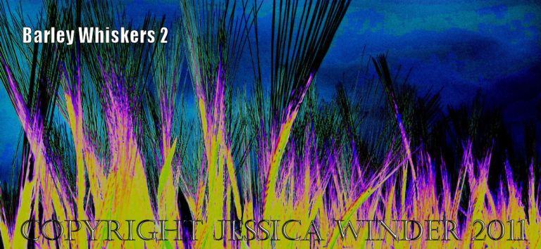 Barley Whiskers 2 Digital artwork of ripening barley