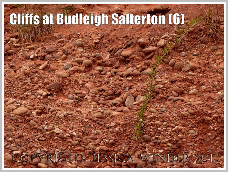 Detail of Budleigh Salterton pebble Beds: Pebble Beds in the cliff at Budleigh Salterton, Devon, U.K. on the Jurassic Coast World Heritage Site, close-up showing the quartzite pebbles and sub-angular stone fragments within the Triassic Bunter Sandstone matrix (6)