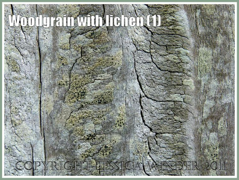 Woodgrain with lichens: Woodgrain pattern and texture enhanced by the delicate colours of encrusting lichens on a fence post exposed to salty sea breezes at Ringstead Bay, Dorset, U.K. on the Jurassic Coast (1)