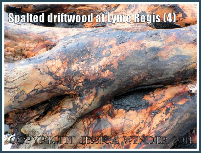 Patterns in nature: Spalting pattern on driftwood from Lyme Regis, Dorset, UK - part of the Jurassic Coast (4)
