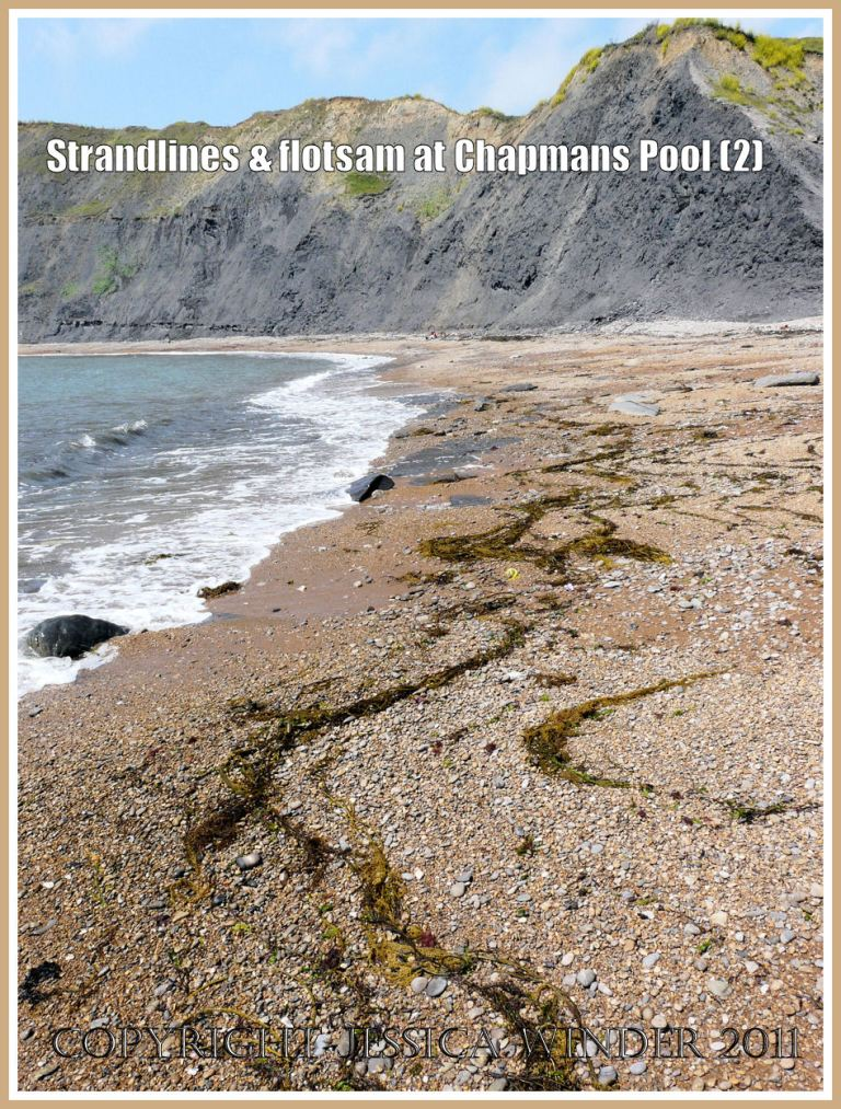 Chapmans Pool strandlines: Sinuous lines of stranded green seaweed on the shingle of the east side of Chapmans Pool, Dorset, UK - part of the Jurassic Coast.