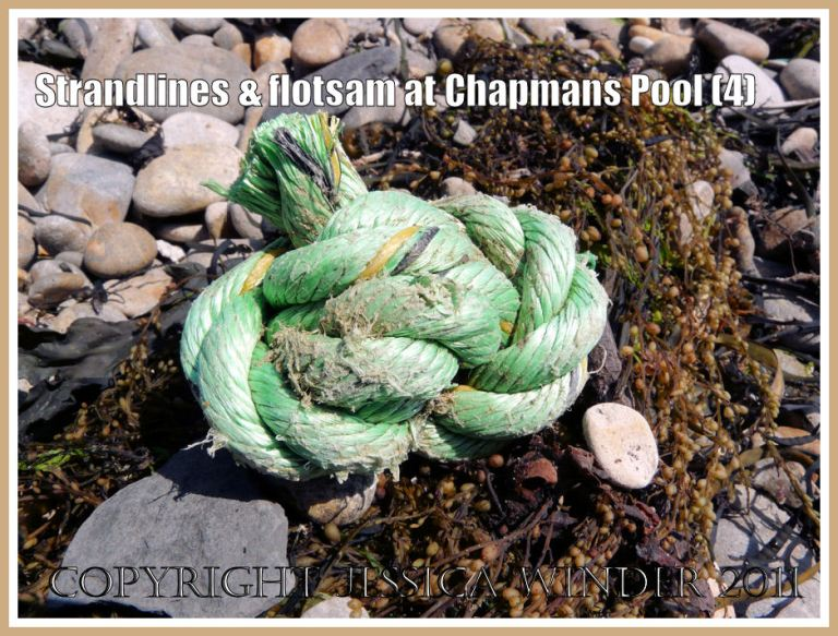 Chapmans Pool strandline with flotsam; Green and yellow rope knot with Japweed on the eastern strandline at Chapmans Pool, Dorset, UK - part of the Jurassic Coast (4)