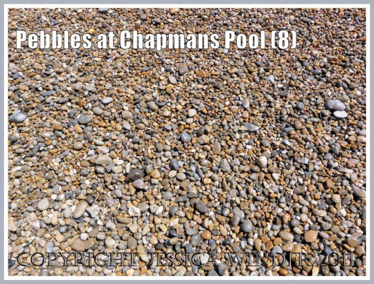 A closer look at very fine shingle on the northwest shore of Chapmans Pool, Dorset, UK - part of the Jurassic Coast (8)