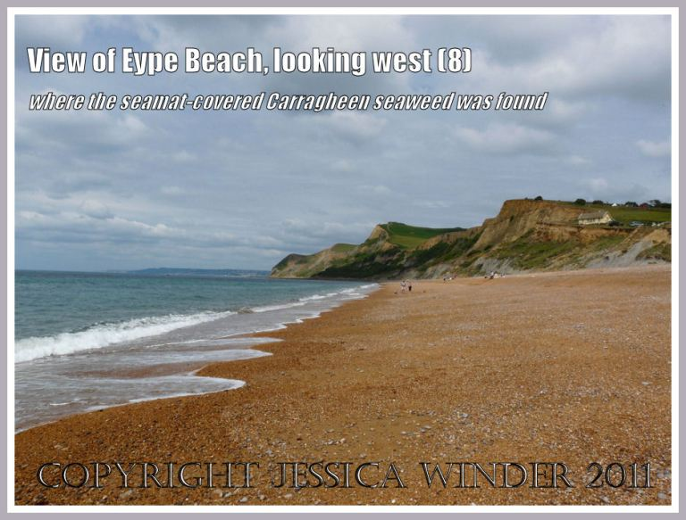 Eype Beach view: The view looking westwards along the shingle beach at Eype, Dorset, UK - part of the Jurassic Coast (8)