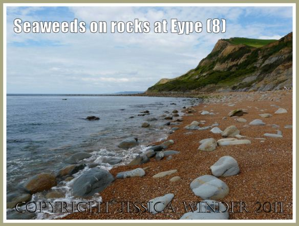 The beach at Eype: A view looking west towards the rocky end of the beach at Eype, Dorset, UK - part of the Jurassic Coast - showing boulders amongst the shingle and in the shallow sea at the water's edge (8)