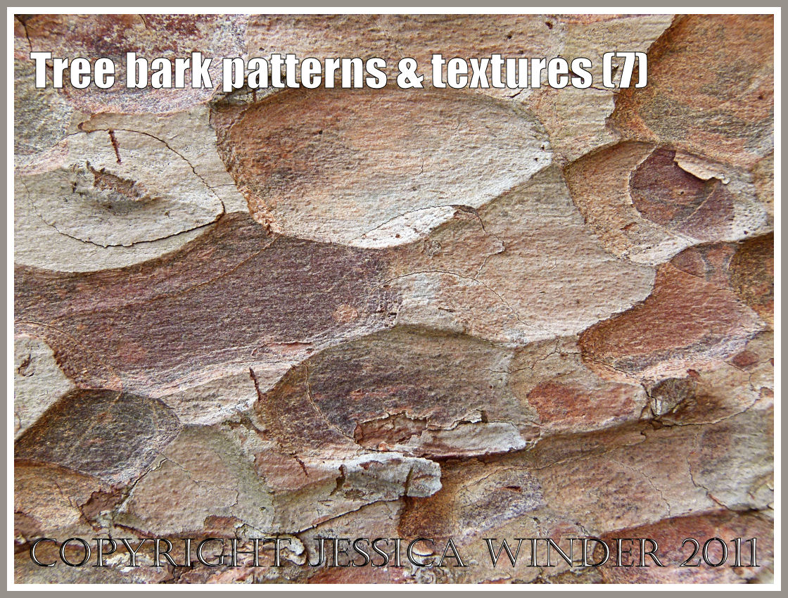 Nature's Pattern Photography: 35 Outstanding Photos - Noupe